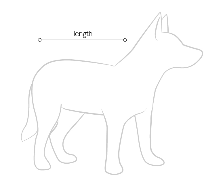 dog-diagram.png