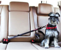 Car Restraint Harness