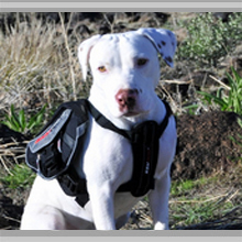 Large dog backpacks category picture.