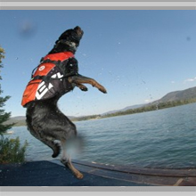 Large dog flotation vests category picture.