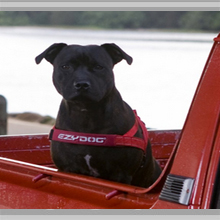 Large dog harness category picture.