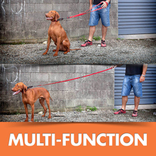 Multi-Function Leashes