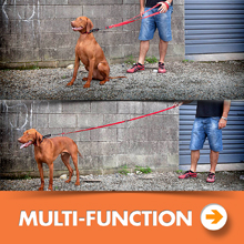 Dog leash multi-function category picture.