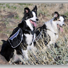 Medium dog backpacks category picture.