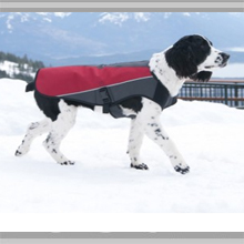 Medium dog coats category picture.