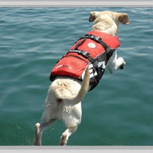 Medium dog flotation vests category picture.