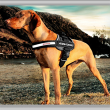 Medium dog harness category picture.
