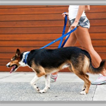 Medium dog leashes category picture.