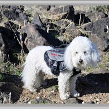 Small dog backpacks category picture.
