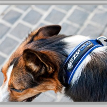 Small dog collars category picture.
