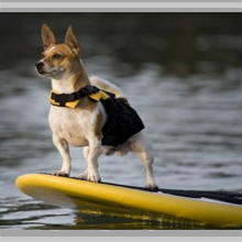 Small dog flotation vests category picture.