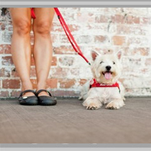 Small dog leashes category picture.