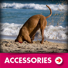 Accessories category picture.