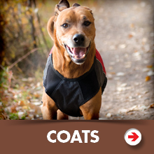 Dog coats category picture.