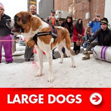 Large dog products