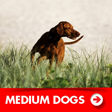 Medium dog products