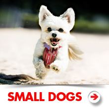 Small dog products