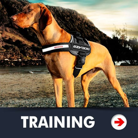 Dog Training Category Picture