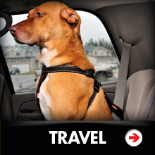 Dog travel category picture.