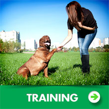 Dog leashes training category picture.